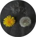 Dandelion Collective