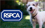 RSPCA Northamptonshire Branch - Market Square